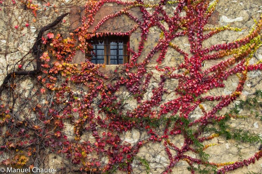 Autumn. Lacock, England